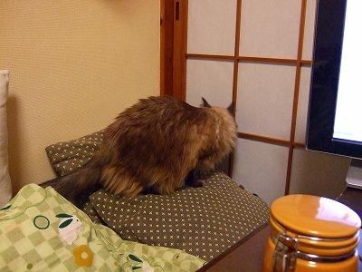 2008_1108kukku0115.jpg