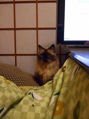 2008_1108kukku0118.jpg