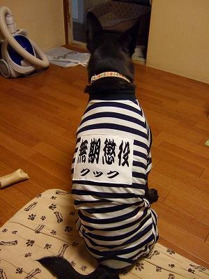 2008_1206kukku0016.jpg