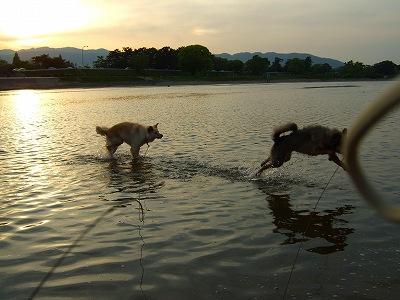 2009_0502kukku0242.jpg