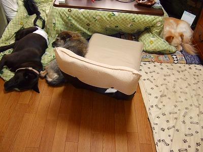 2009_0620kukku0261.jpg