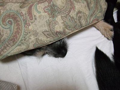 2009_1103kukku0051.jpg