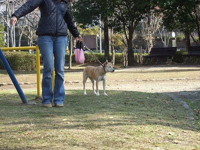 2009_1130kukku0094.jpg