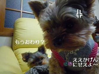 2009_1124 デジカメ写真20069