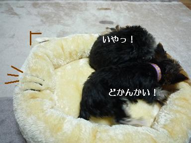 P1070105.jpg