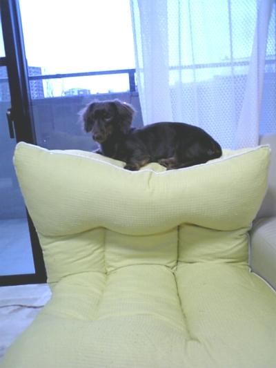 ここは座椅子の上だよ