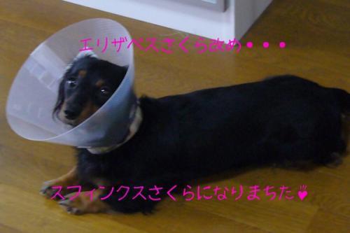 20070723-04.jpg