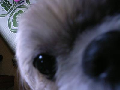 愛犬のアップ