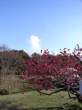 臨海公園の春