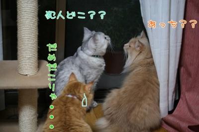 Mint&Moca&Kotetsu 捜査ー1