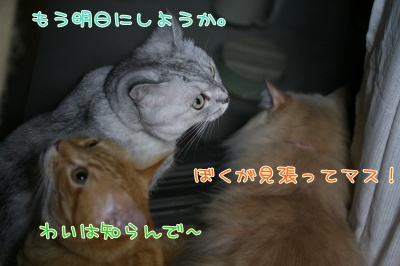 Mint&Moca&Kotetsu 捜査ー3