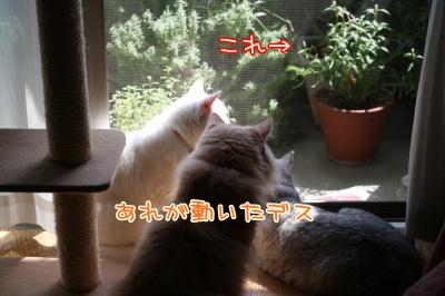 Mint&Moca&Jill 捜査ー4