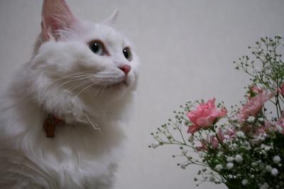 Jill お花のプレゼント
