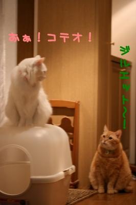 Kotetsu&Jill おぉ!コテオ