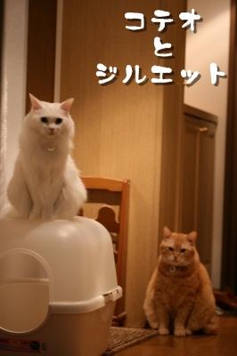 Kotetsu&Jill 小劇場のはじまり~