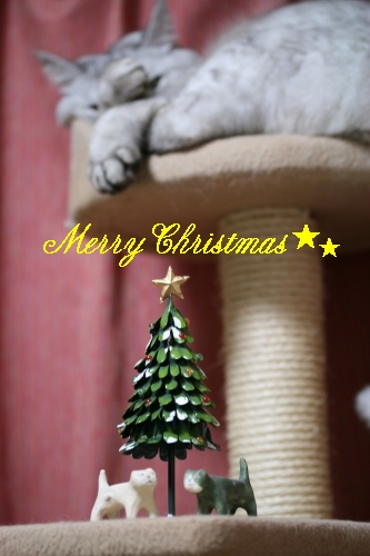 Mint メリークリスマス☆
