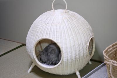 Mint ウチュウセン キニイッタ