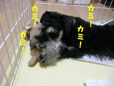 チビリンおもちゃ遊び5-s