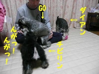 4匹お遊び1-s