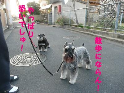 チビリン散歩4-s