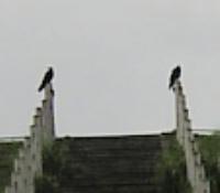 2羽のカラス