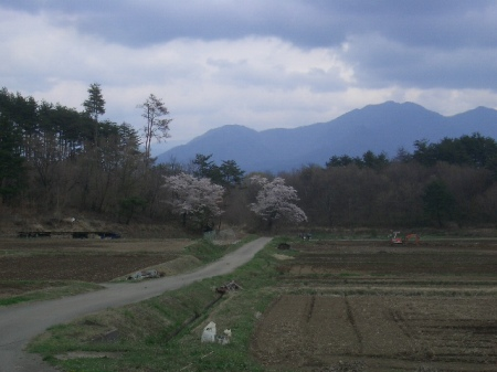 穴山 桃の花見 119