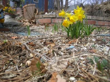 穴山 桃の花見 032