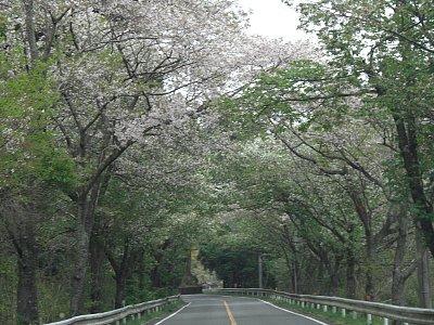葉桜になりかけ