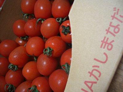 ミニトマト水戸