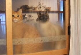 猫写真展①