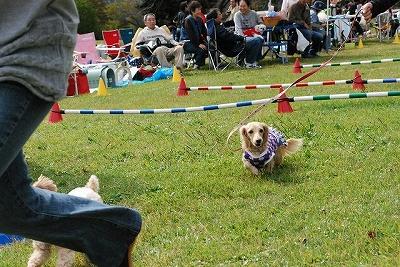 dog1運動会