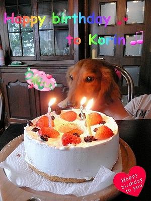 こりんのお誕生日
