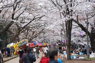 お花見:大宮公園