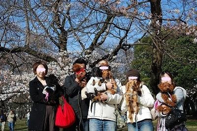 お花見:所沢航空記念公園
