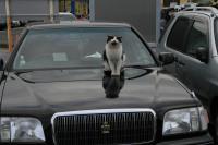 駐車場管理猫