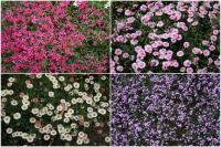 花模様の絨毯