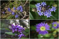 紫の花4態