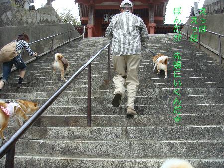 階段えっほ