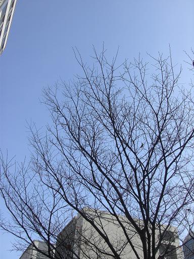ki1_20100105142745.jpg