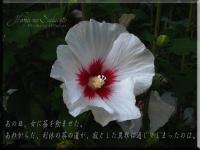 377-0.jpg