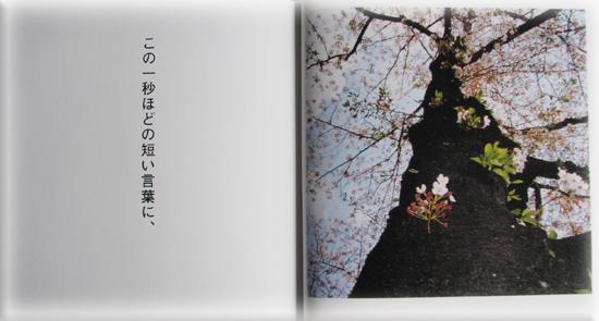 391-4.jpg
