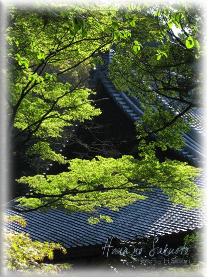 406-2.jpg