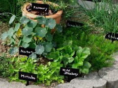 キッチンハーブの花壇