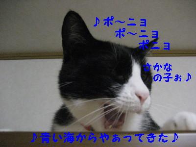 1IMG_1646.jpg