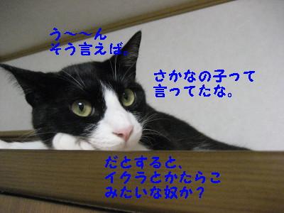 3IMG_1641.jpg