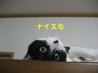 IMG_1057.jpg