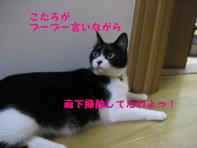 IMG_1132.jpg
