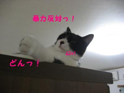 IMG_1143_20080819094157.jpg