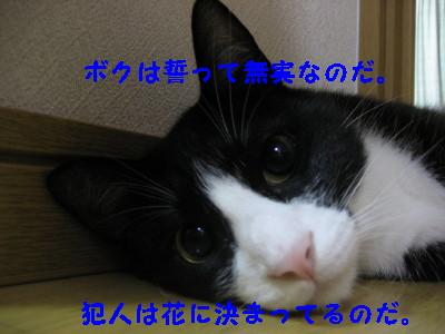IMG_1158.jpg