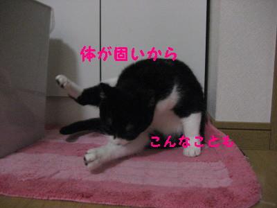 IMG_1290.jpg